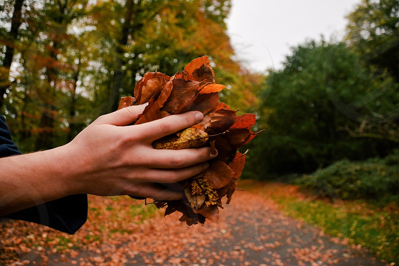 Hands hand holding leaves hold leaf autumn human persona dream clear fall photo
