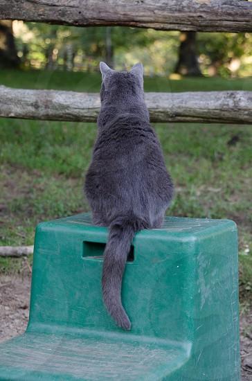 russian blue cat pm green plastic chair photo