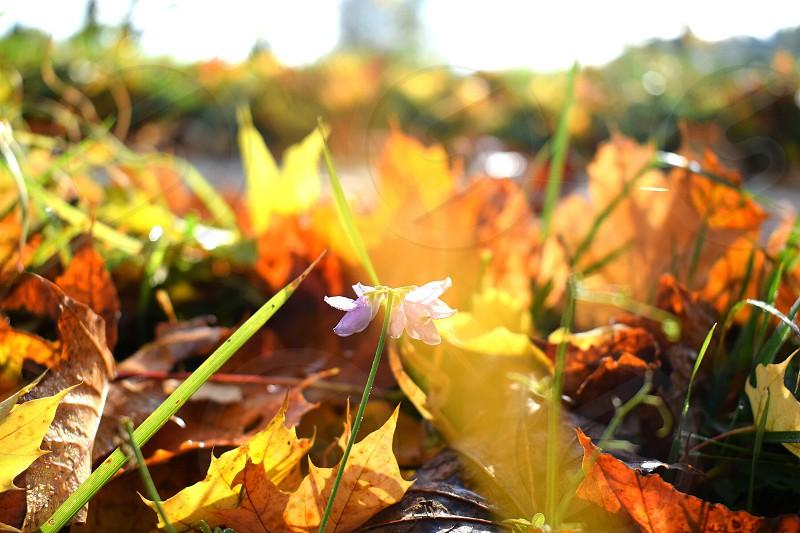 romantic autumn photo