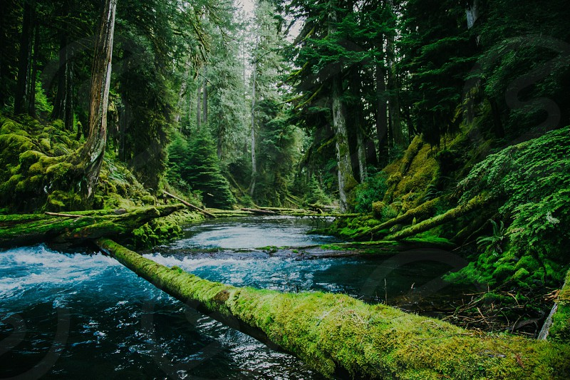 earth earth day green oregon paradise river pnw photo
