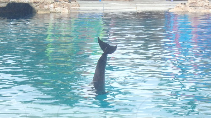 Colourful Dolphin Tail photo