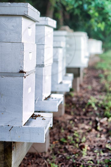 Early morning shot of the bee hives kept by a small local farm in East Tennessee. photo