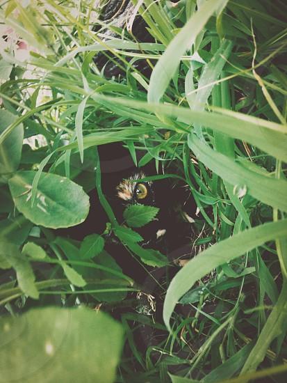 animal cat stalking drama grass plants hidden hiding watching eye pet photo