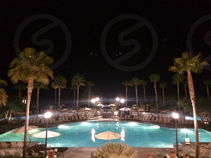 pool and lights with palm trees photo