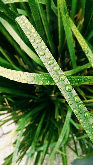 green leafed plants with dew photo