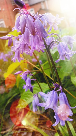 Spring rain! photo