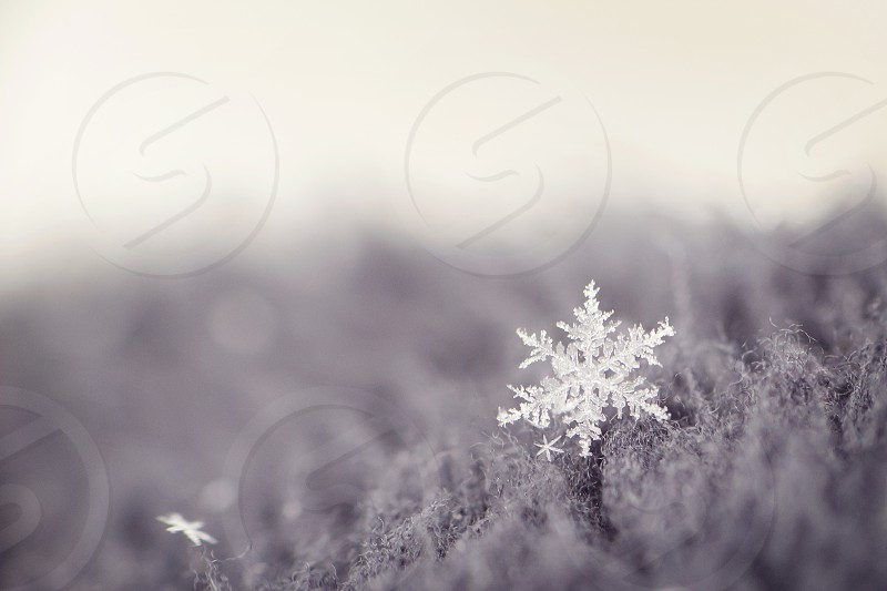 Close up of a snowflake. photo