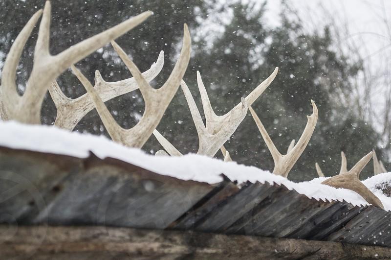deer antlers trophies winter cold snow tin roof frozen ice photo