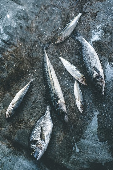 Wash fish. Sea bream sea bass mackerel and sardines. Bulgaria Plovdiv photo
