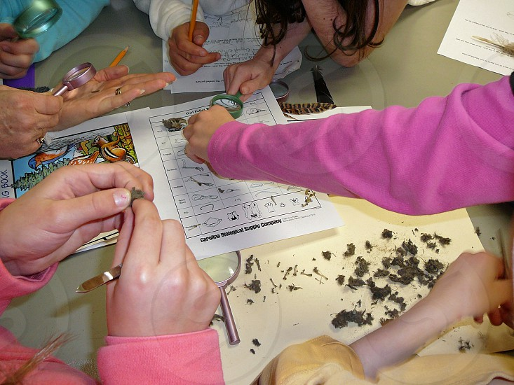 Students engaged in an owl pellet dissection. photo