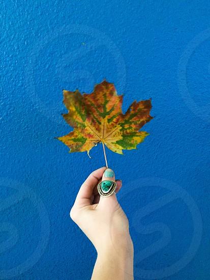 I see fall photo
