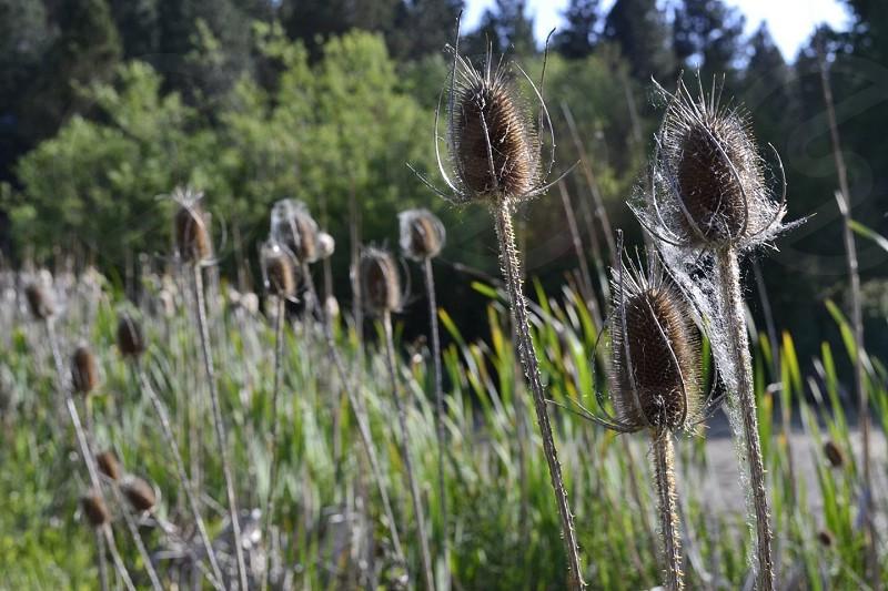 Talking at Camp Polk meadows photo