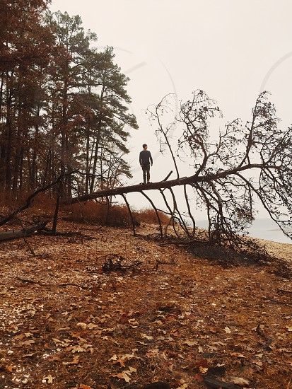 man standing on leaning tree photo