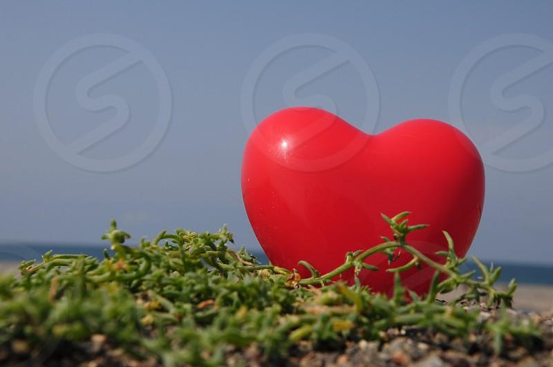 green succulents near red heart shape balloon photo