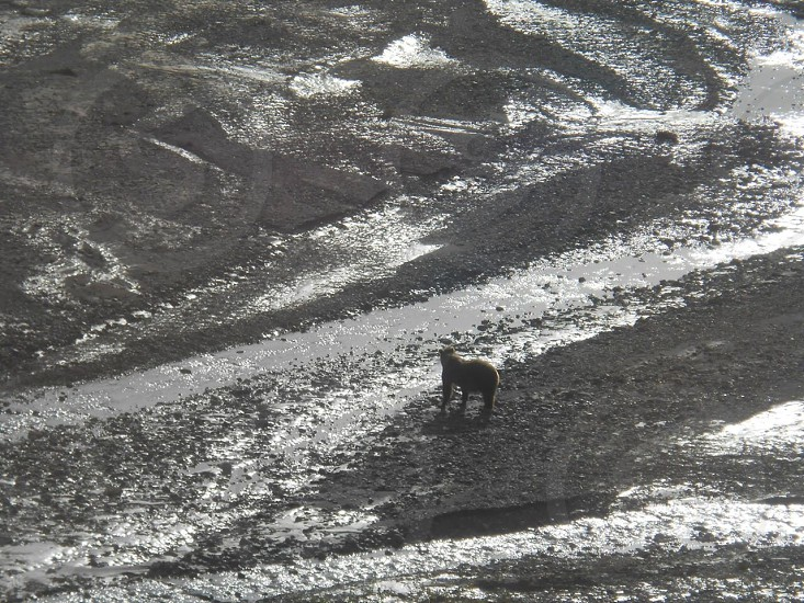 grayscale photography of animal trying to cross water stream photo