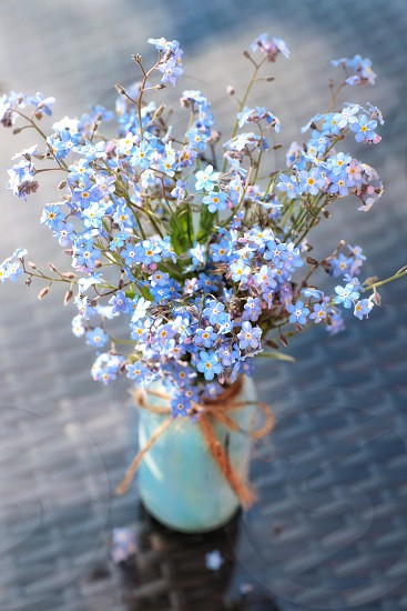 Flowers bouquet forgetmenot vase blue photo