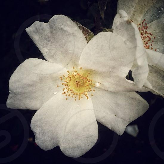 white and yellow flower photo