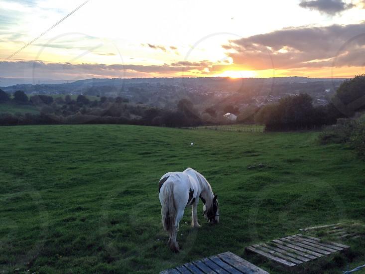 Sunset over farmland photo
