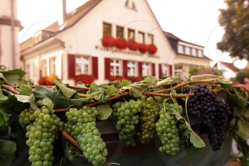 the old town of the villige  Sasbach in Kaiserstuhl in the Blackforest in the south of Germany in Europe. photo