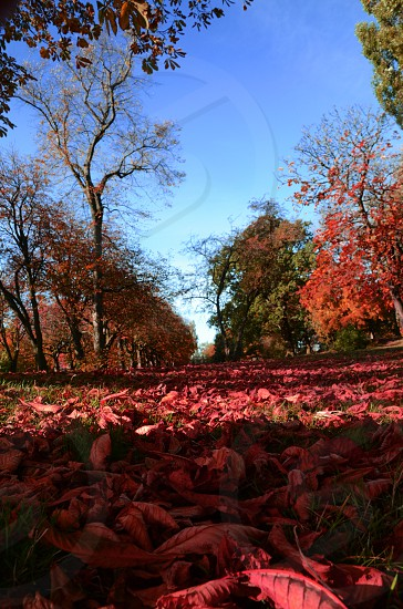 Autumn leaves red colours seasons park  sunshine photo
