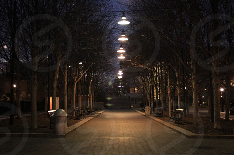 street lights in between trees turned on photo