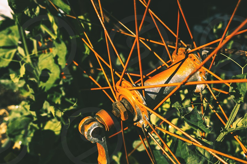 A vintage bicycle spoke wheel in the garden photo