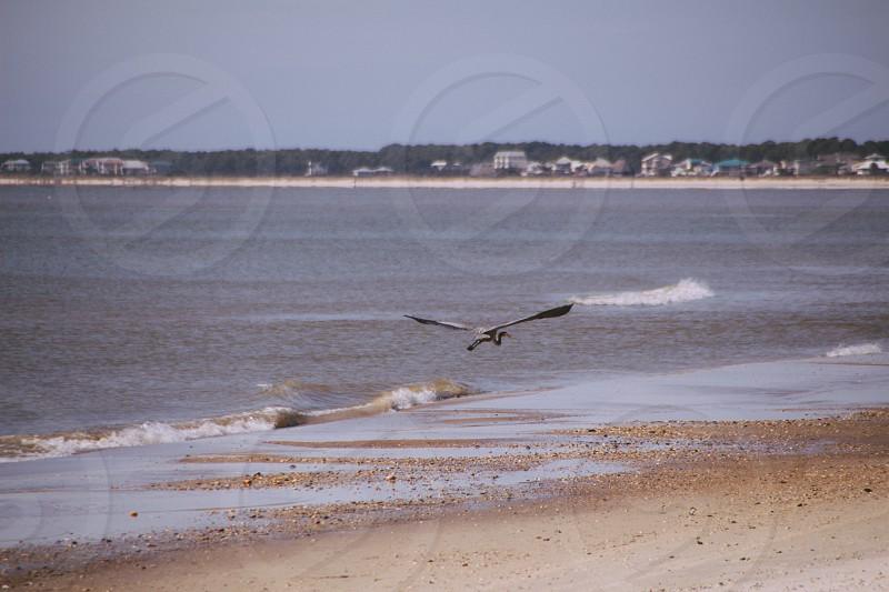 white egret flying near at the seashore photo