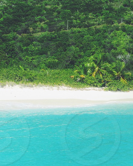 Green blue ocean sea trees Caribbean water relax vacation summer forest solitude photo