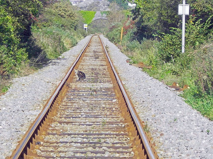 Cat on the rails photo