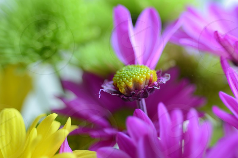 purple and yellow petal flowers photo