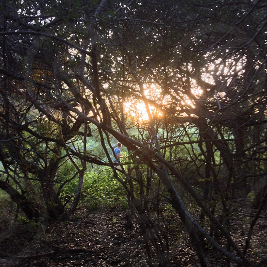 Sun Shining Over Tree Branches photo