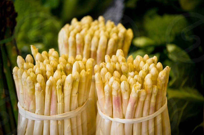 yellow asparagus tied in bundles photo