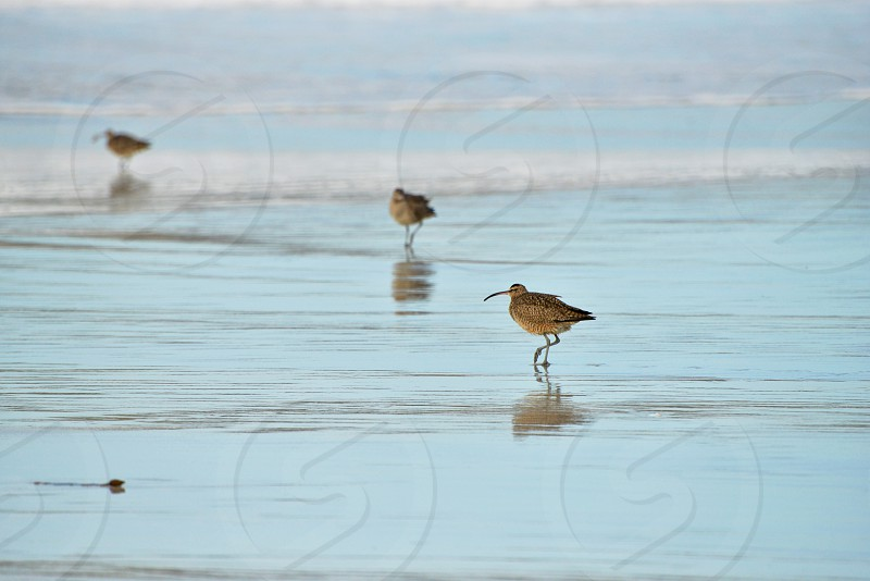 brown birds on beach photo