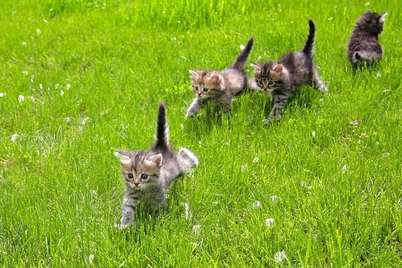 Little fluffy kittens on a green lawn photo