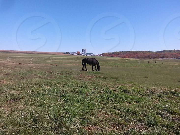 black horse standing in green grass field photo