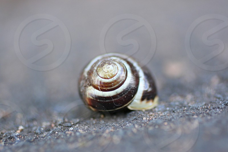 brown snail shell on concrete surface photo