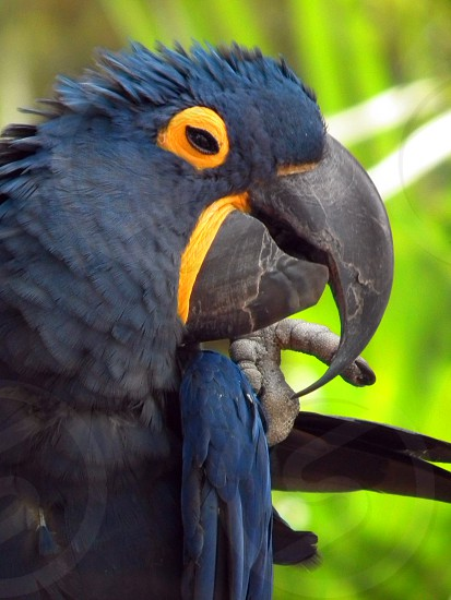 shallow depth of field photo of hyacinth macaw during daytime photo