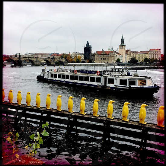 Outdoor day square filter colour art installation sculpture statues penguins birds yellow gallery garden Prague Czech Czech Republic Europe European east eastern travel attraction tourism tourist wanderlust Autumn fall river Kampa Park David Cerny view vista Charles Bridge boat photo