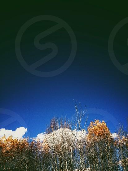 blue sky and trees photo photo