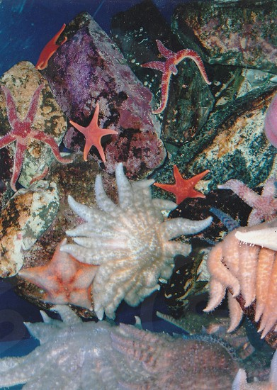 Star fish Ocean life colorful photo