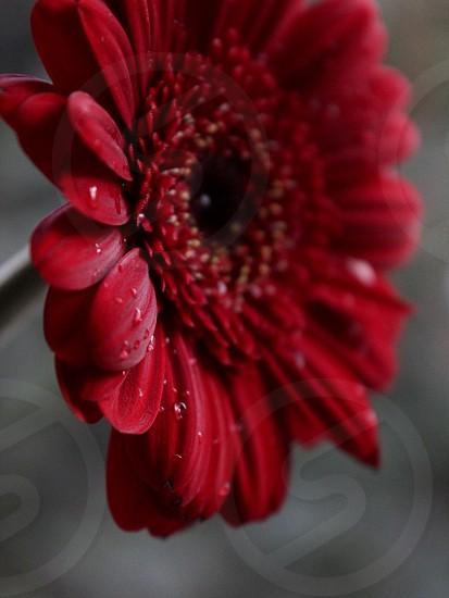 Spring flower bloom blooming nature macro rain dew photo