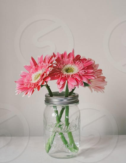 clear glass flower vase photo