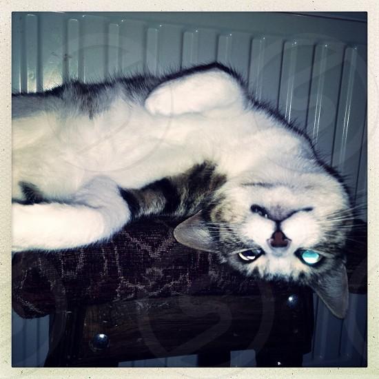 Crazy cat photo
