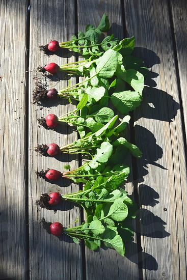 1 raw consist of 8 red turnip with its leaves lay on brown wooden surface during daytime photo