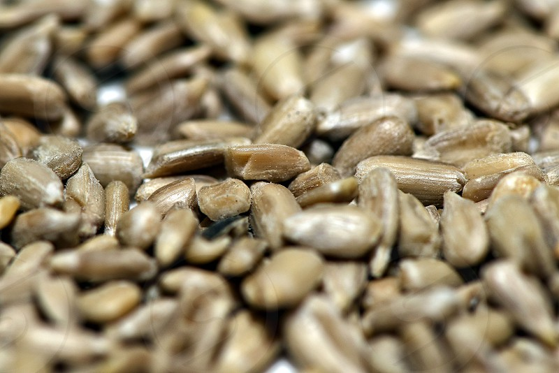 Food ingredients close up photography - sunflower seeds. photo