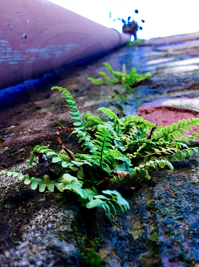 POV looking up a brick wall with small ferns growing out of it photo