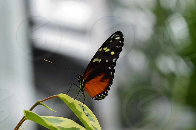 Orange butterfly insects bugs nature spring colorful  photo