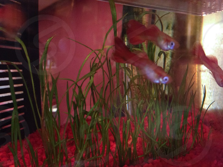 I pesciolini  photo