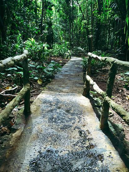 Railing;Hawaii;plants;summer;fun;adventure;awesome;trees;sky;grey;beautiful;dirt;Kauai;vacation;ride photo
