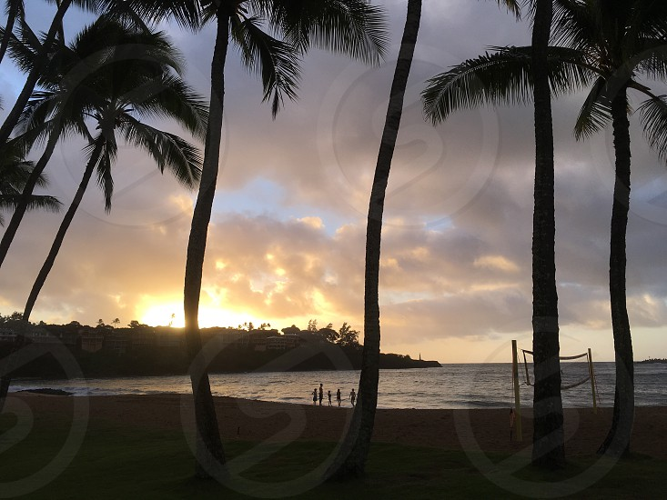 Hawaii sunrise water Palm trees  photo